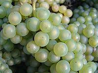 200px-Chardonnay_grapes_close_up